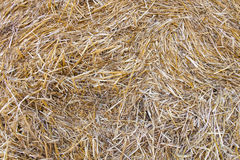 Wheat residues background Stock Photos