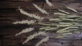 Brown rice and wheat plant on wooden background Stock Image
