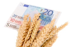 Wheat ripe harvest ears euro banknotes isolated Stock Photography