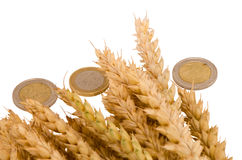 Wheat ripe harvest ears euro coins isolated white Stock Image
