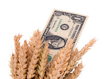 Wheat ripe harvest ears usa dollar cash banknote Stock Photos