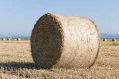 Wheat roll on the agriculture field Stock Photo