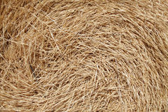 Wheat  roll background. Photo #1 Royalty Free Stock Photos