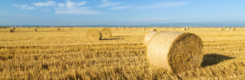 Wheat roll bales at field, sunrise scene. Stock Photography