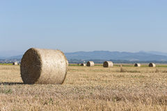 Wheat rolls on the agriculture field Royalty Free Stock Photos