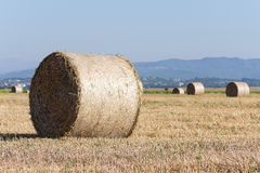 Wheat rolls on the agriculture field Royalty Free Stock Photo