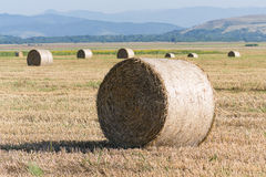 Wheat rolls on the agriculture field Royalty Free Stock Images