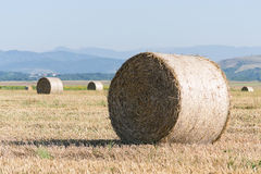 Wheat rolls on the agriculture field Stock Photo