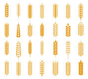 Wheat, rye and barley ear set Stock Images