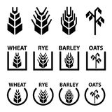 Wheat rye barley oat cereal spike ears symbols Stock Image