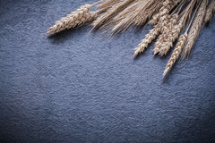 Wheat rye ears on black background horizontal view Stock Photography