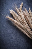 Wheat rye ears on black background vertical version Royalty Free Stock Images