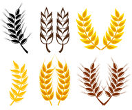 Wheat and rye ears collection Royalty Free Stock Photo