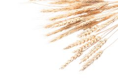 Wheat and rye ears isolated on white Stock Photo