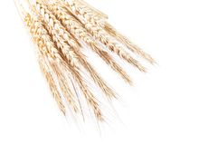 Wheat and rye ears isolated on white horizontal image Royalty Free Stock Photography