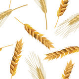 Wheat and rye ears seamless pattern. Seamless pattern wheat and rye ears. Vector illustration EPS 10 Royalty Free Stock Photos
