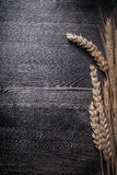 Wheat and rye ears on wooden board copyspace Royalty Free Stock Photography