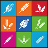 Wheat and rye. Elements for design. Icon set. Royalty Free Stock Photos