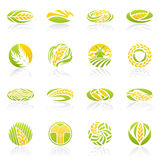Wheat and rye. Vector logo template set. vector illustration
