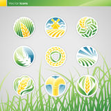 Wheat and rye. Vector logo template set. royalty free illustration