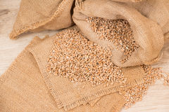 Wheat in a sack Royalty Free Stock Photo