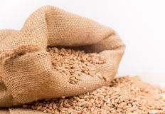 Wheat in a sack Royalty Free Stock Image