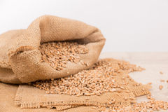 Wheat in a sack Stock Photo