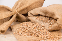 Wheat in a sack Stock Image