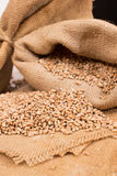 Wheat in a sack Royalty Free Stock Images