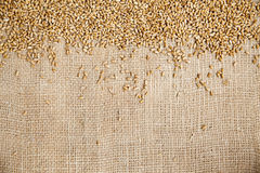 Wheat on sack cloth Royalty Free Stock Images