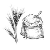Wheat and sack of flour. Royalty Free Stock Images
