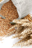 Wheat and the scattered bag with a grain Royalty Free Stock Photo