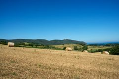 Wheat and sea. Landscape yellow green and blue Stock Images