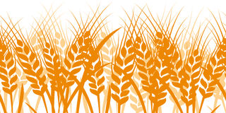 Wheat seamless Royalty Free Stock Images