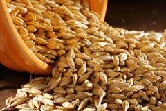 Wheat seed Stock Images