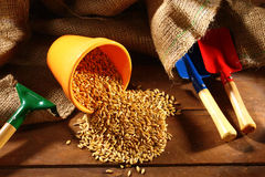 Wheat seed Royalty Free Stock Images