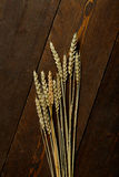 Wheat Seed. In dark wood table Stock Photography