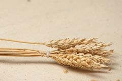 Wheat seed Royalty Free Stock Image