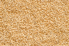 Free Wheat Seed Texture Royalty Free Stock Images - 48464419