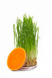 Wheat seedlings and a slice of pumpkin royalty free stock photography