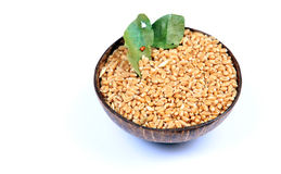 Wheat Seeds Stock Photos