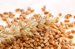 Wheat with seeds Stock Photography