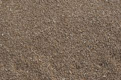 Wheat seeds Stock Images