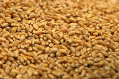 Wheat seeds Royalty Free Stock Photo