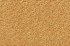Wheat seeds and berries close up shot for texture or background vector illustration