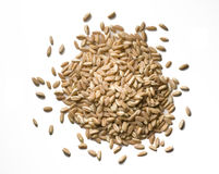 Wheat seeds Stock Image
