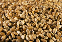 Wheat seeds Royalty Free Stock Photography