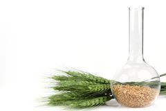 Wheat seeds and plant Stock Images