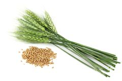 Wheat seeds and plant Stock Photos