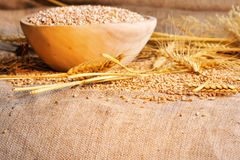 Wheat seeds on rough material Stock Image